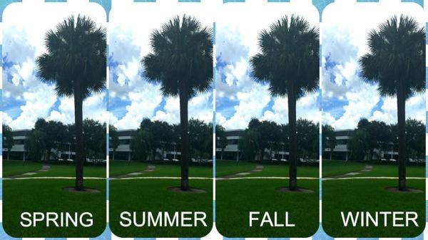 Fl seasons