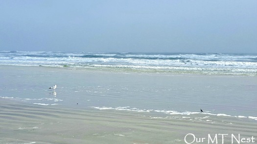 shore birds 2w