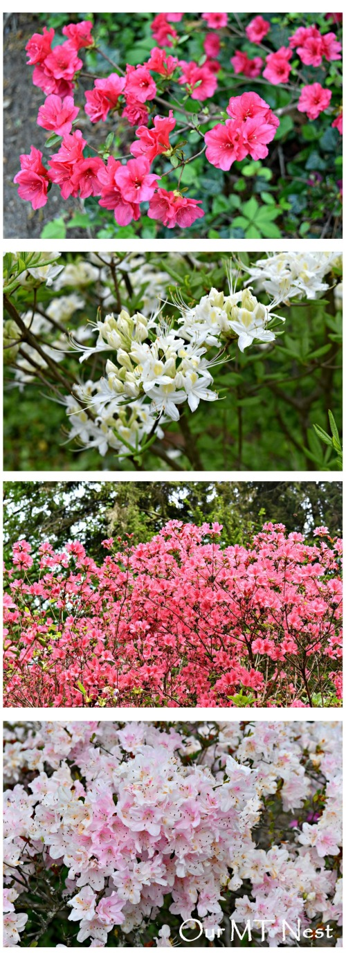 Azalea Collage 3 white w